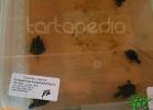 verona-reptiles-2012-nadia-r-47
