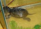 verona-reptiles-2012-nadia-r-48