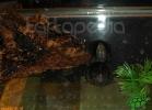 verona-reptiles-2012-nadia-r-49