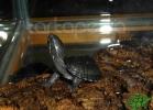 verona-reptiles-2012-nadia-r-50