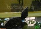 verona-reptiles-2012-nadia-r-51