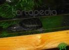 verona-reptiles-2012-nadia-r-52