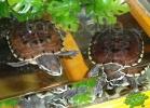 verona-reptiles-2012-nadia-r-53