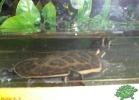 verona-reptiles-2012-nadia-r-54