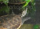 verona-reptiles-2012-nadia-r-55