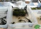 verona-reptiles-2012-nadia-r-56