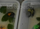 verona-reptiles-2012-nadia-r-57