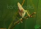 verona-reptiles-2012-nadia-r-59