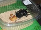 verona-reptiles-2012-nadia-r-60