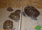 verona-reptiles-2012-rino-sauda-03