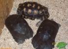 verona-reptiles-2012-rino-sauda-04