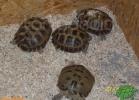 verona-reptiles-2012-rino-sauda-05