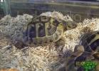 verona-reptiles-2012-rino-sauda-06