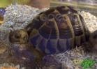 verona-reptiles-2012-rino-sauda-07