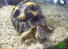 verona-reptiles-2012-rino-sauda-10