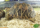 verona-reptiles-2012-rino-sauda-11