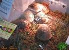verona-reptiles-2013-005
