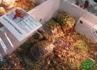 verona-reptiles-2013-006