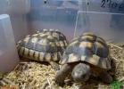 verona-reptiles-2013-008