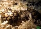 verona-reptiles-2013-009