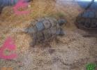 verona-reptiles-2013-011