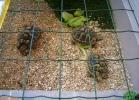 verona-reptiles-2013-013