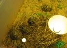 verona-reptiles-2013-015