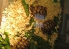 verona-reptiles-2013-016