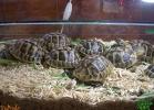 verona-reptiles-2013-017