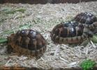 verona-reptiles-2013-018