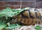verona-reptiles-2013-019