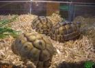 verona-reptiles-2013-020