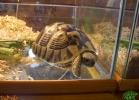 verona-reptiles-2013-021