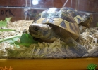 verona-reptiles-2013-022