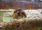 verona-reptiles-2013-023