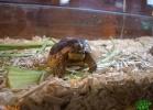 verona-reptiles-2013-024