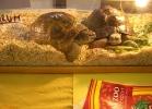 verona-reptiles-2013-026