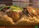 verona-reptiles-2013-027