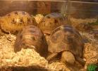 verona-reptiles-2013-028