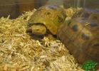 verona-reptiles-2013-029
