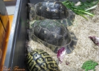 verona-reptiles-2013-030