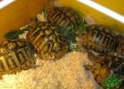 verona-reptiles-2013-031