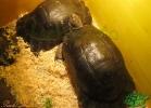 verona-reptiles-2013-033