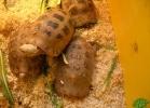 verona-reptiles-2013-034