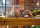 verona-reptiles-2013-035