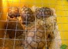 verona-reptiles-2013-037