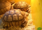 verona-reptiles-2013-038