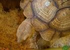 verona-reptiles-2013-040