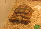 verona-reptiles-2013-041
