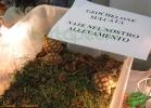 verona-reptiles-2013-042